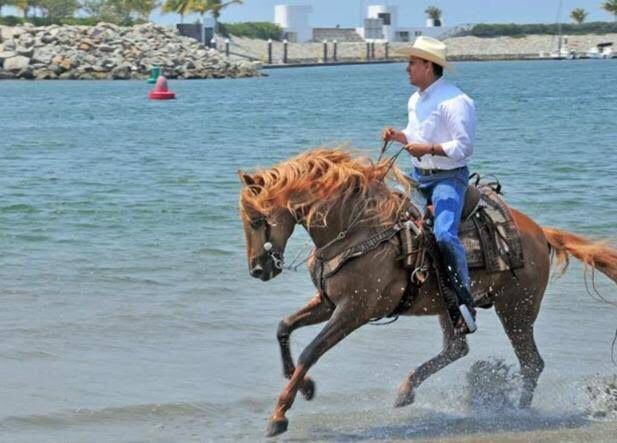 Roberto Sandoval,de tener dos caballos, ahora cuenta con 800 raza pura  española: Proceso   Certeza Política